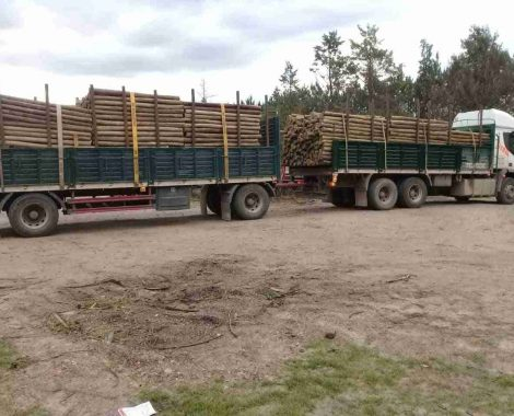 Power Poles - Utility Poles - Axe Breaker Hardwood New Zealand (3)